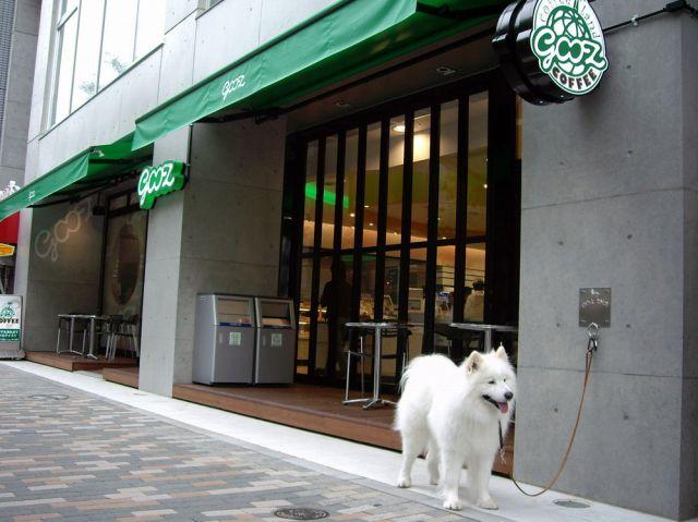 渋谷でティッシュ?_c0062832_179587.jpg