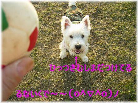 d0080336_175110.jpg