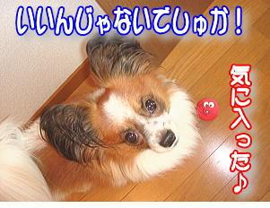 f0011845_039228.jpg