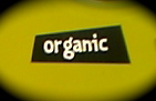 06.10.17  ORGANIC_e0038558_1364356.jpg