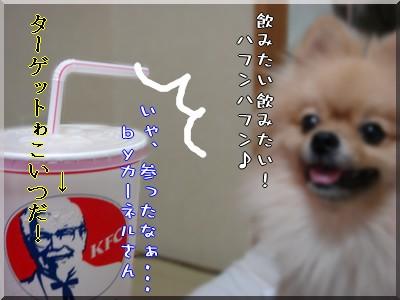 b0078073_10381195.jpg