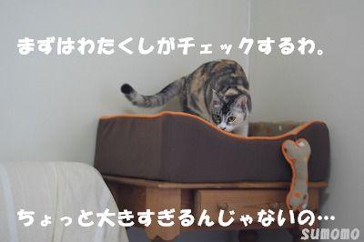 f0063729_1564675.jpg