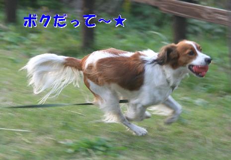 d0013149_041248.jpg