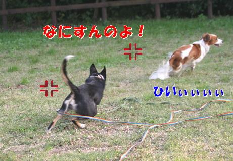 d0013149_09291.jpg