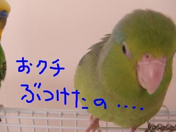 b0082757_2261598.jpg