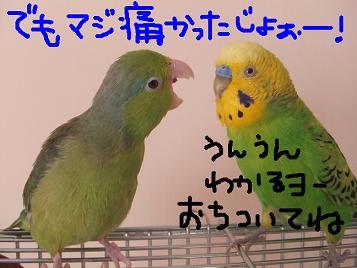 b0082757_2271332.jpg