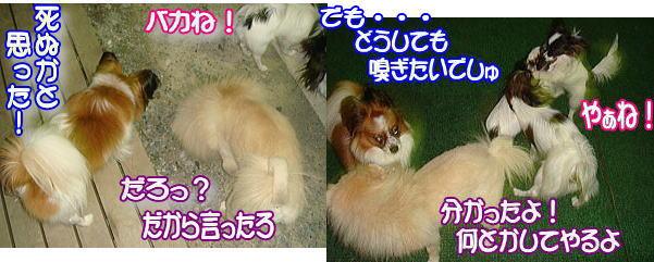 f0011845_061870.jpg