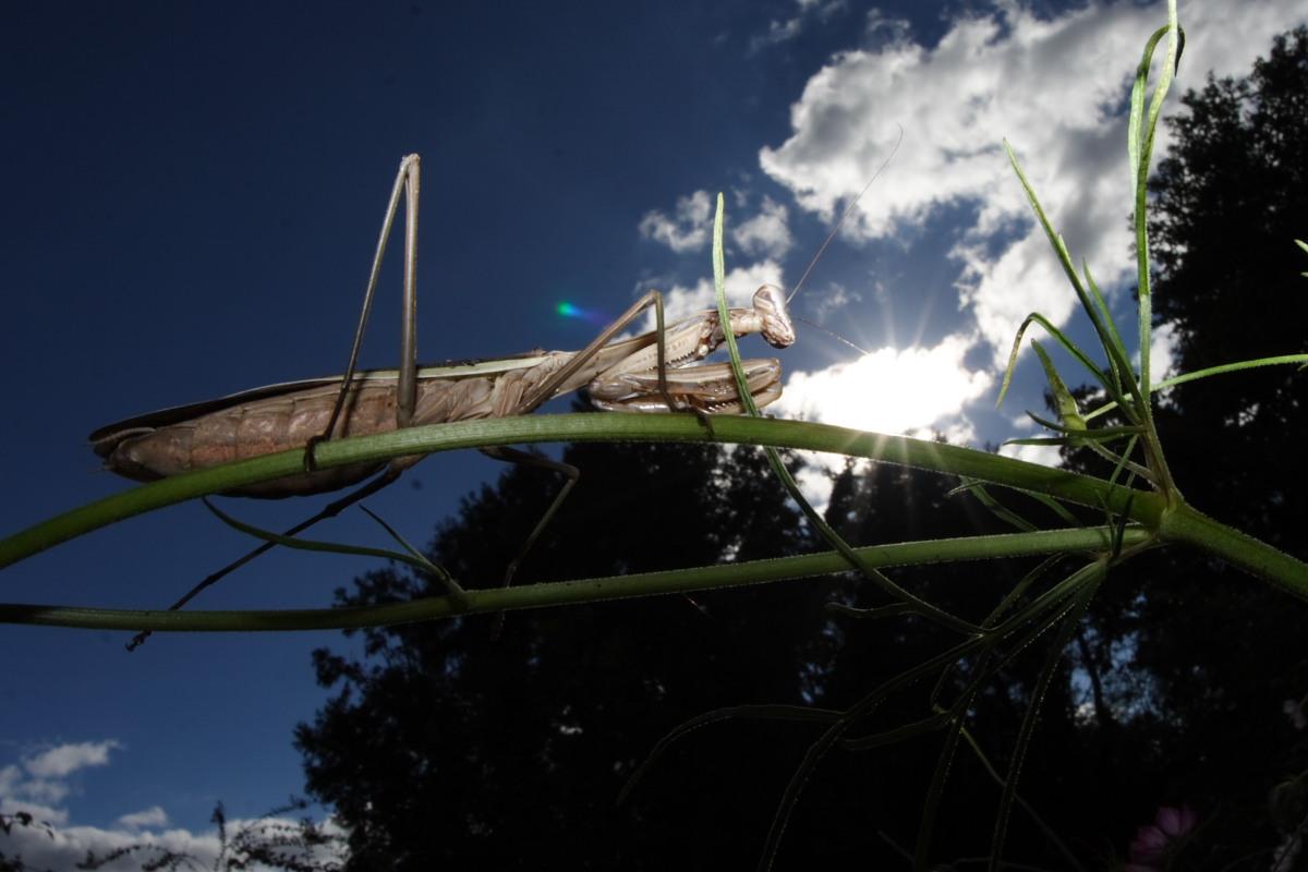 秋桜 万博公園 1_f0021869_22304233.jpg