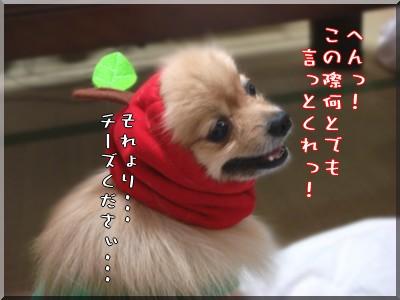 b0078073_2235776.jpg