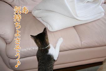 f0101903_13585395.jpg