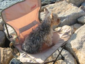 ベージュ色の布製のパイプ椅子、その上に小型のわんこがちゃんとお座りして景色を眺めています。