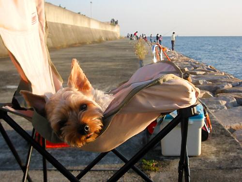 パイプ椅子の上にでれ~っと横たわっているわんこ。目がとろんとしています。椅子の向こうには何組かの家族連れが釣りを楽しんでいます。遠くに水平線が見えて、穏やかな海の風景が広がっています。