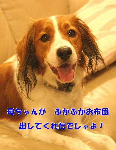 d0013149_0244287.jpg