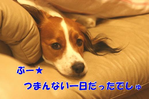 d0013149_21235111.jpg
