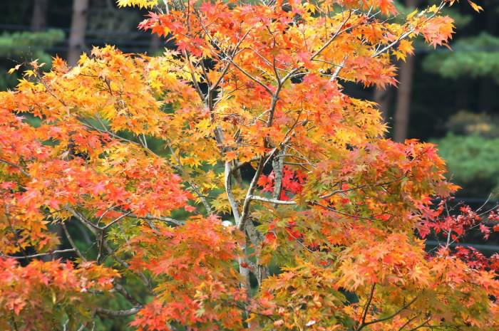 10月21日 山梨・・湖めぐり(1)_b0078795_0113332.jpg