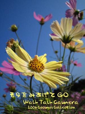 d0074009_4594656.jpg
