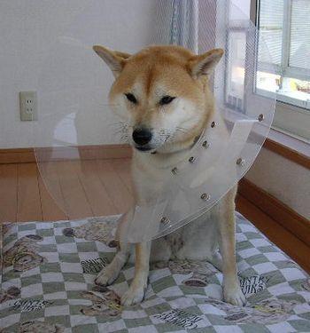 2006年10月23日(月)・・・小雨のエリザベス愛ちゃん_f0060461_21243139.jpg