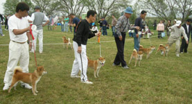 日本犬保存会、秋季の福岡支部展覧会_b0057675_11482936.jpg