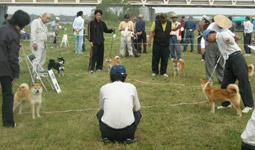 日本犬保存会、秋季の福岡支部展覧会_b0057675_11494468.jpg