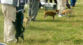 日本犬保存会、秋季の福岡支部展覧会_b0057675_1149654.jpg
