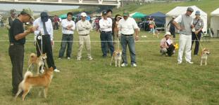 日本犬保存会、秋季の福岡支部展覧会_b0057675_11501637.jpg