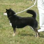 日本犬保存会、秋季の福岡支部展覧会_b0057675_11504229.jpg