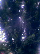 スズメの成る木_f0108797_17582465.jpg