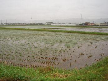 雨が続きます_b0074601_2235418.jpg