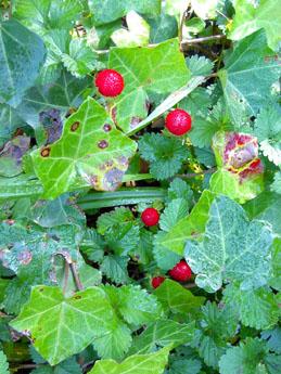 秋のRosengarten・1_f0032969_115173.jpg