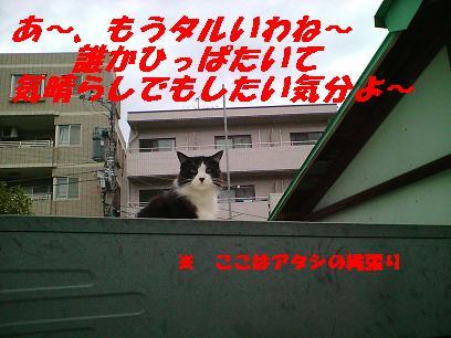 b0085185_12323256.jpg