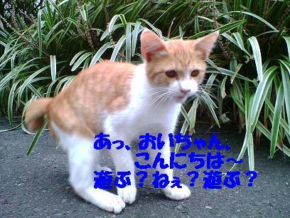 b0085185_12341153.jpg