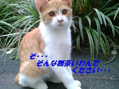 b0085185_123621100.jpg