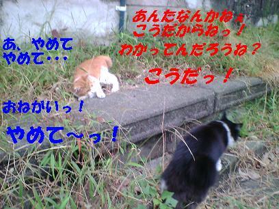 b0085185_12381497.jpg