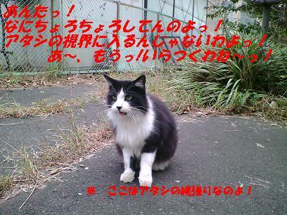 b0085185_1254286.jpg