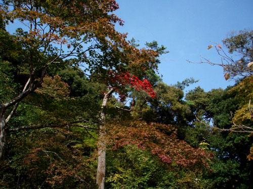 紅葉はじまるー嵯峨野_e0048413_2117321.jpg