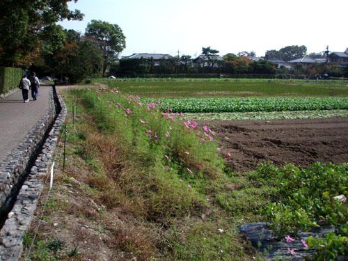 紅葉はじまるー嵯峨野_e0048413_21181612.jpg