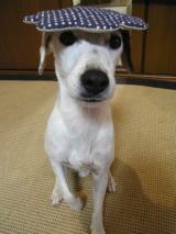 愛犬とともに完成のお知らせ_d0091671_7545370.jpg