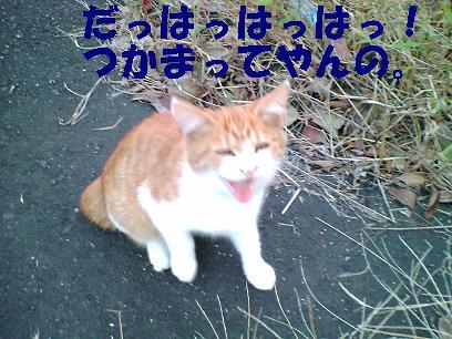 b0085185_2242029.jpg