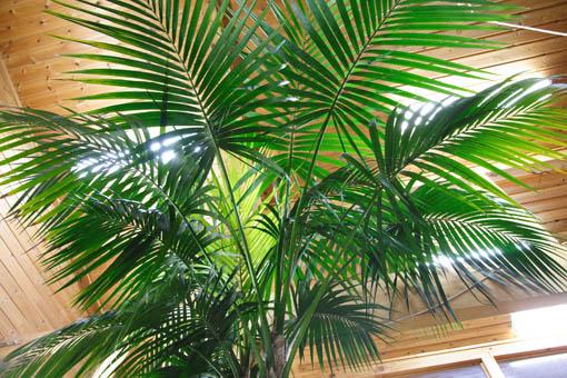 事務所の植物_e0054299_18291334.jpg
