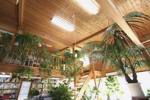 事務所の植物_e0054299_18303213.jpg