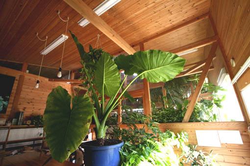 事務所の植物_e0054299_18304540.jpg