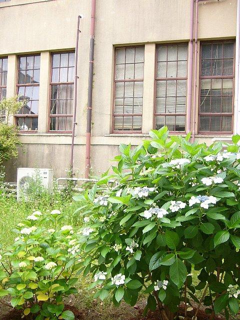 神戸女学院 理学館_c0094541_13565053.jpg