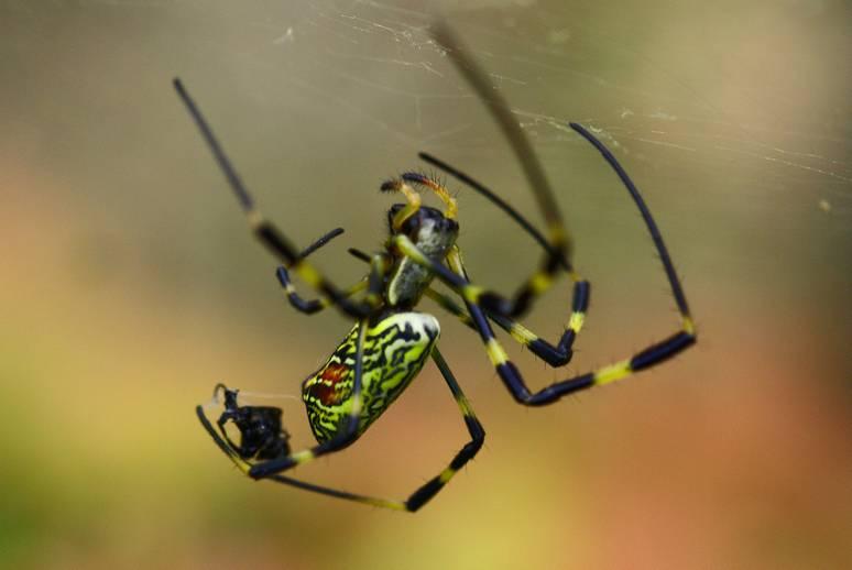 奥多摩 初秋の女郎蜘蛛たち_d0086248_23125157.jpg