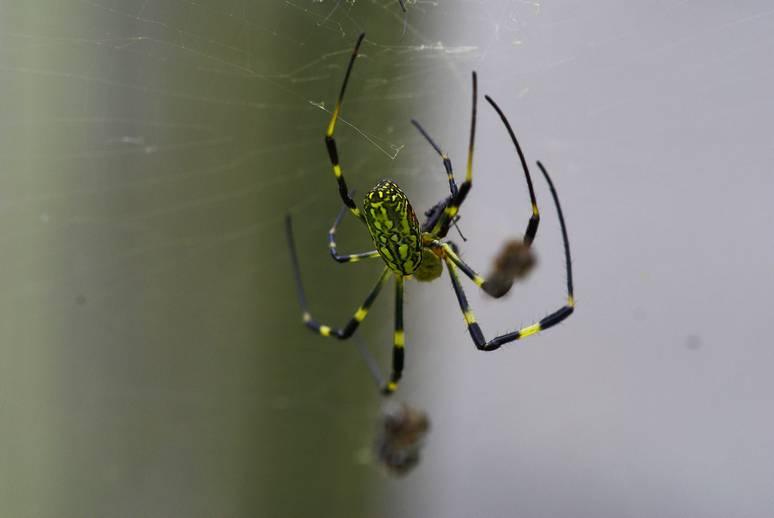 奥多摩 初秋の女郎蜘蛛たち_d0086248_2313918.jpg