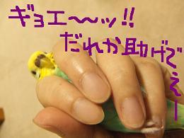 b0082757_111829.jpg