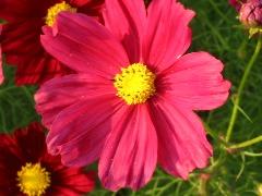 b0039373_20113651.jpg