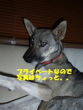 c0000189_14515554.jpg