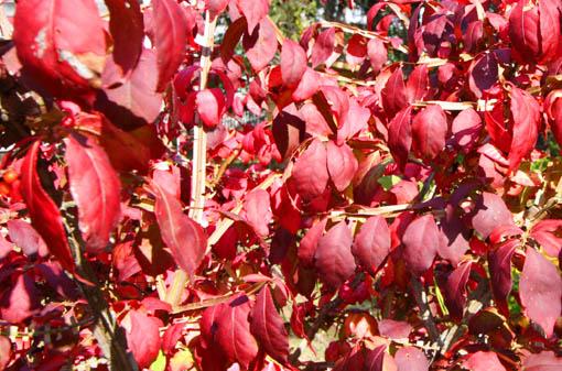 庭の紅葉_e0054299_17182635.jpg