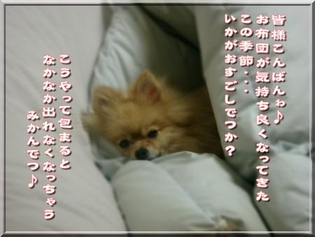 b0078073_23554174.jpg