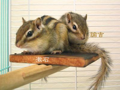 諭吉と漱石と栗